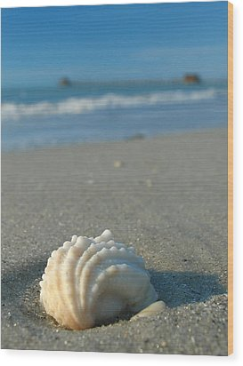 Conch Shell Wood Print by Juergen Roth
