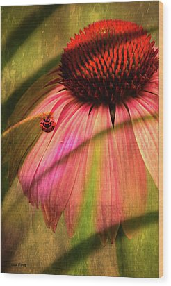 Cone Flower And The Ladybug Wood Print