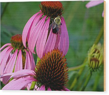 Cone Flower  Bumble Bee Macro Wood Print by Martin Morehead