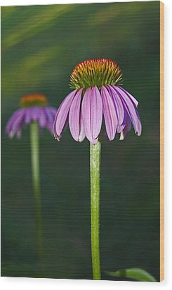 Wood Print featuring the photograph Cone Flower by Elsa Marie Santoro