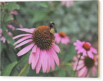 Wood Print featuring the photograph Cone Flowers And Bee by Sheila Brown