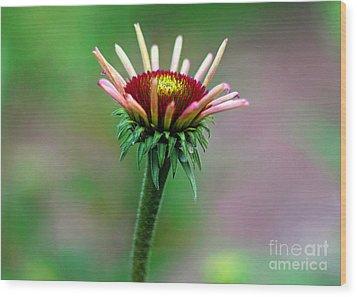 Coneflower Bloom Wood Print by Lisa L Silva