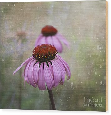 Coneflower Dream Wood Print by Nina Silver