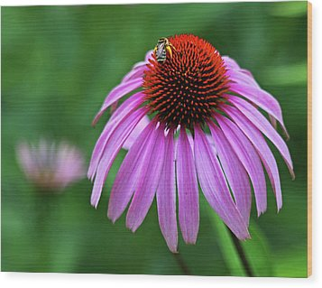 Wood Print featuring the photograph Coneflower by Judy Vincent