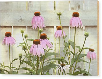 Coneflower Patch Wood Print by Steve Augustin