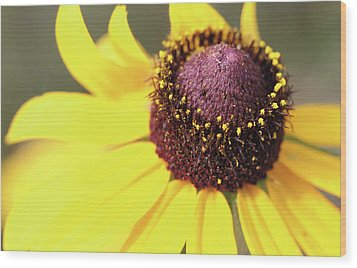 Coneflower Wood Print by Paul Drewry
