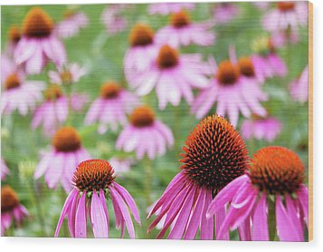 Wood Print featuring the photograph Coneflowers by David Chandler