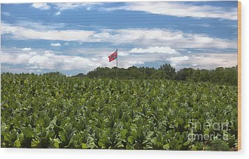 Confederate Flag In Tobacco Field Wood Print