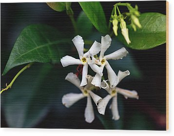 Confederate Jasmine Wood Print by Sennie Pierson