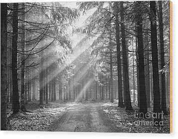 Conifer Forest In Fog Wood Print by Michal Boubin