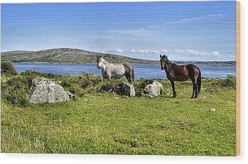 Connemara Ponies Wood Print