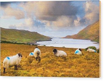Connemara Sheep Grazing Over Killary Fjord Wood Print by Mark E Tisdale