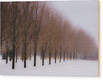 Wood Print featuring the photograph Connolly Trees by Don Nieman