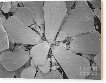 Conservatory Nature In Black And White 1 Wood Print by Carol Groenen