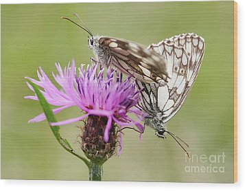 Contact - Butterflies On The Bloom Wood Print by Michal Boubin