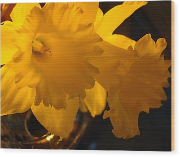 Contemporary Flower Artwork 10 Daffodil Flowers Evening Glow Wood Print by Baslee Troutman