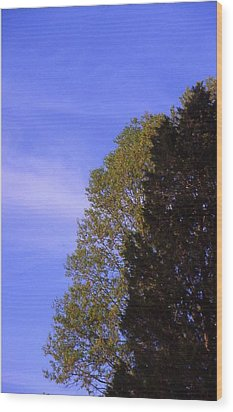 Contrasting Trees Against Sky Wood Print by Randy Muir