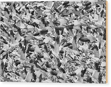 Wood Print featuring the photograph Controlled Chaos Bw by Everet Regal