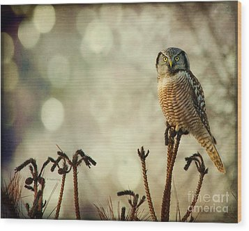 Convenient Perch Wood Print by Heather King