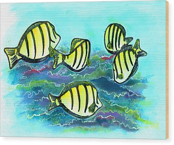 Convict Tang Fish #209 Wood Print by Donald k Hall