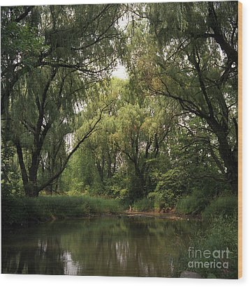 Cook County Forest Preserve No 6 Wood Print by Kathy McClure