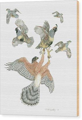 Cooper's Hawk And Gambels Quail Wood Print by Tim McCarthy