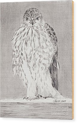 Coopers Hawk Wood Print by Shevin Childers