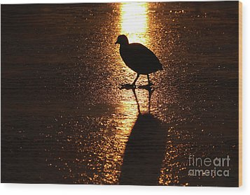 Coot Walks On Golden Ice  Wood Print
