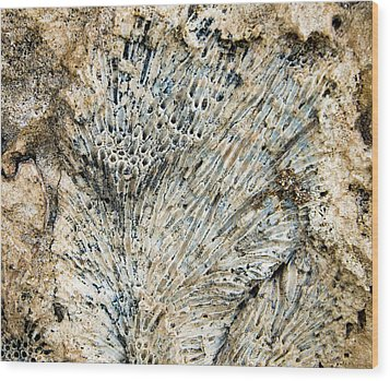 Wood Print featuring the photograph Coral Fossil by Jean Noren
