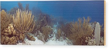 Coral Reef Wood Print by Peter Scoones