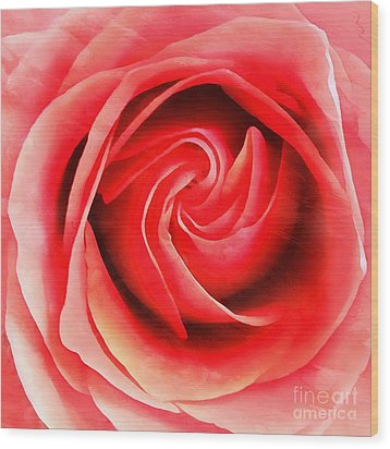 Wood Print featuring the photograph Coral Rose - My Pleasure - Rose by Janine Riley