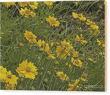 Coreopsis And Mexican Heather Wood Print by Kerry Beverly