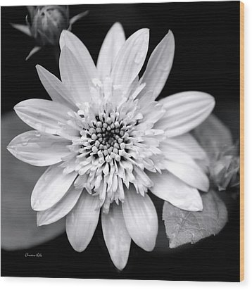 Wood Print featuring the photograph Coreopsis Flower Black And White by Christina Rollo