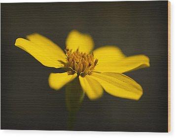 Coreopsis Verticillata Wood Print