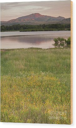 Corepsis Blooming At The Quanah Parker Lake Wood Print by Iris Greenwell