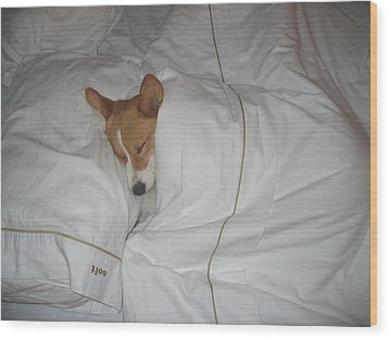 Corgi Sleeping Softly Wood Print by Don Struke