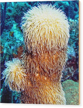 Wood Print featuring the photograph Corky Sea Finger Coral - The Muppet Of The Deep by Amy McDaniel