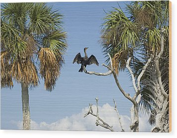 Cormorant Drying Wood Print by Stacey Lynn Payne
