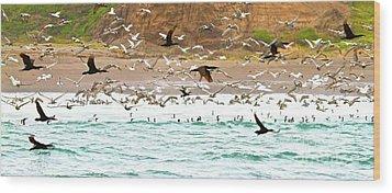 Cormorant Flight In Frenzy Wood Print by Gus McCrea