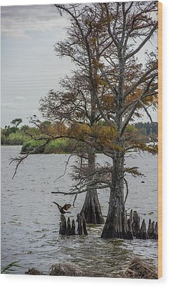 Wood Print featuring the photograph Cormorant by Paul Freidlund