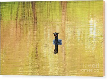 Double Crested Cormorant With Crazy Hair Wood Print by Charline Xia