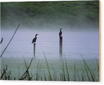 Wood Print featuring the photograph Cormorants by Art Shimamura