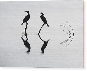 Cormorants At Rest Wood Print by Steven A Bash