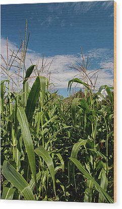 Wood Print featuring the photograph Corn 2287 by Guy Whiteley