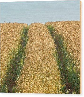 Corn Field Wood Print by Heiko Koehrer-Wagner