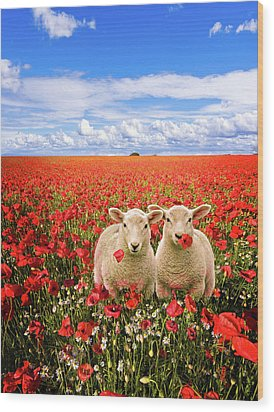 Corn Poppies And Twin Lambs Wood Print by Meirion Matthias