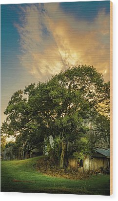 Wood Print featuring the photograph Corner Oak by Marvin Spates