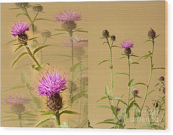 Cornflower Collage Wood Print by Donald Davis