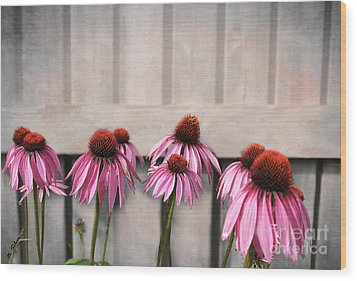 Coneflower Couples Wood Print by Nina Silver