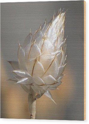 Cornflower Seed Pod Wood Print by Michele Penner